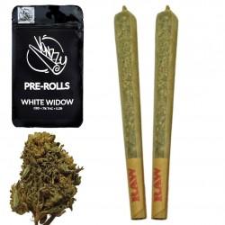 Joint CBD White Widow